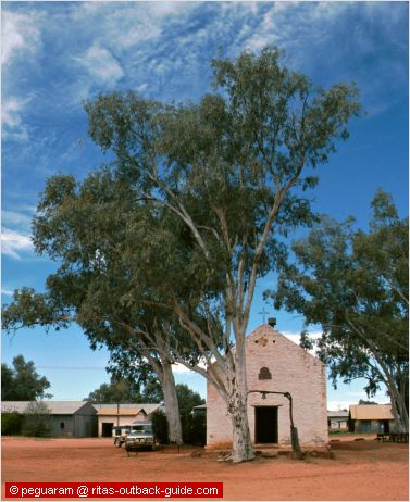 white church and huge gum tree