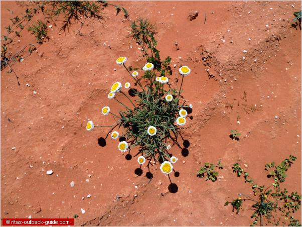 flowers on a sandy road