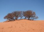 dune with dry bushes