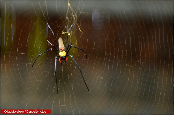 Dangerous Australian Wildlife Spiders Scorpions And