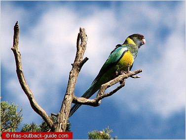 Colourful parrot on top of a tree