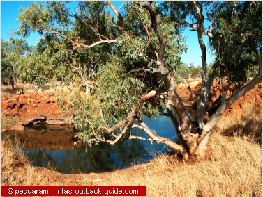 waterhole surrounded by ancient trees