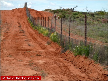 Dingo fence at Cameron Corner