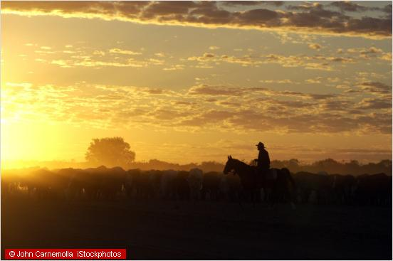 romanctic scenery in the outback with cattle and horses