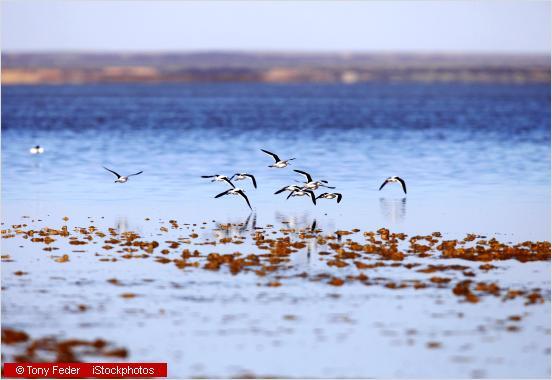 birds flying over a salt lake
