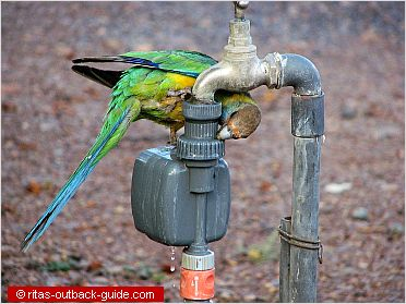 parrot sitting on a tap