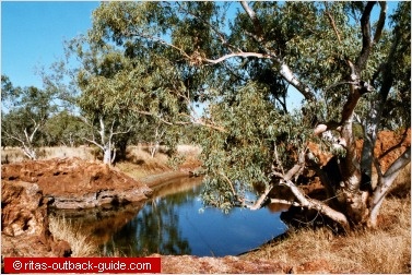 waterhole surrounded by gum trees