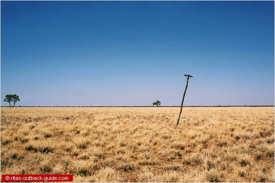 tree & pole in a lonely landscape
