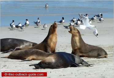 seals and seagulls on a beach