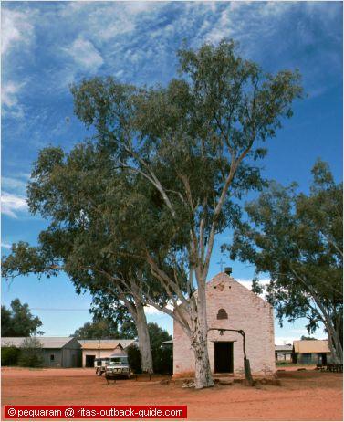 white church and huge gum tree