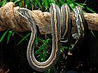 snake on a branch