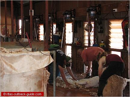 shearers at work