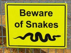 Not all Australian snakes kill you, learn how to avoid harm