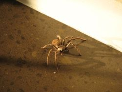 Go and discover the creepy-crawlies, learn which ones to avoid