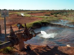 The flowing bore in Thargomindah