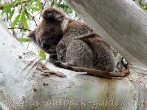 Discover the unique Australian wildlife