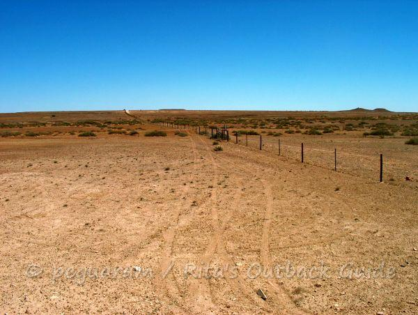 The dog fence in the outback to protect cattle and sheep country
