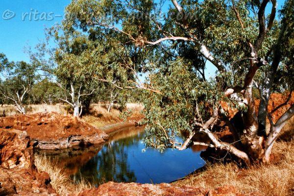 Beautiful scenery at Boulia waterhole
