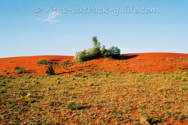 red sand, golden bushes and blue sky - the colours of the Outback