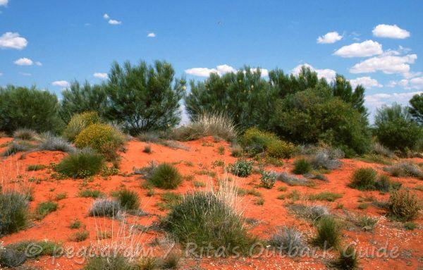 A red sand hill covered with bushes