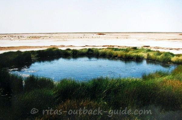 Blanche Cup - Artesian spring along the Oodnadatta track