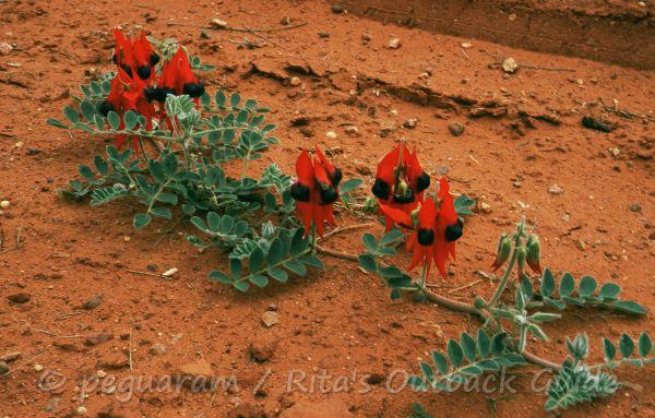 Wildflowers in the middle of a dirt road