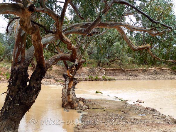 River scenery in Thargomindah