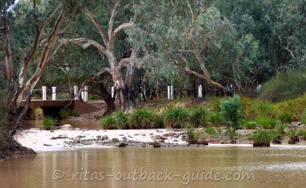 Old trees along the Bulloo river