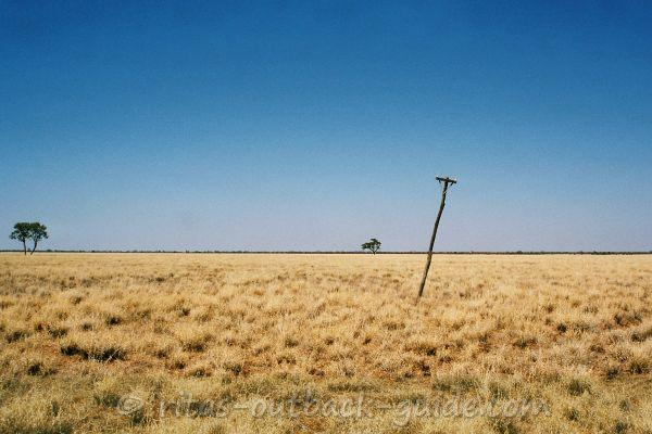 Wide plain with yellow Mitchell grass