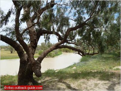 Cooper Creek at Dig Tree Historical Reserve