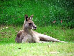 Get an overview about Australian mammals, reptiles, birds and insects