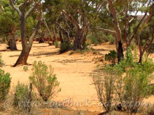 Dry creek bed with river red gum trees